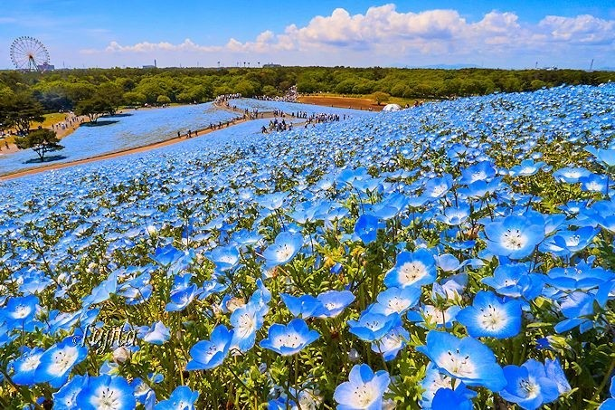 Top 10 สถานที่เที่ยวแนะนำช่วง Golden Week ในญี่ปุ่น