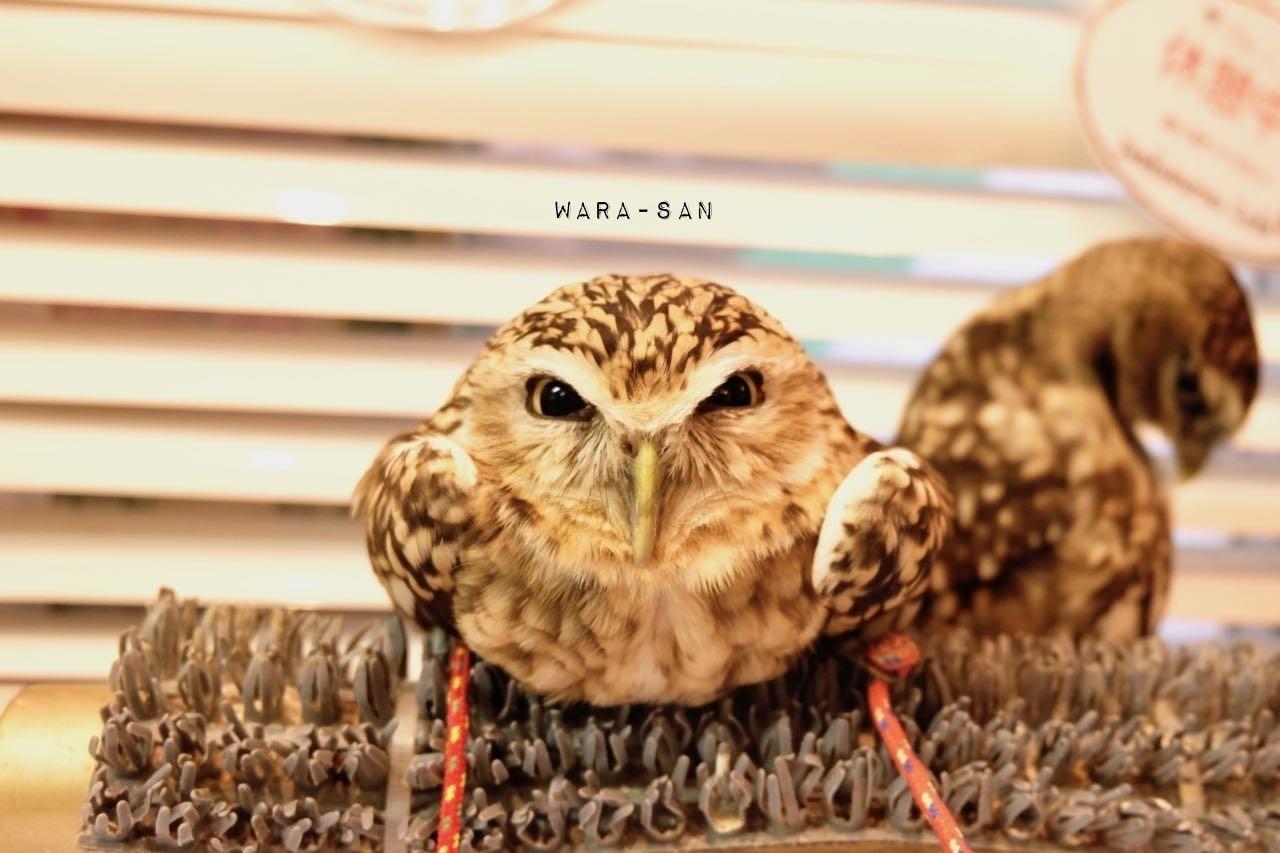 พาเที่ยวคาเฟ่นกฮูก : คาเฟ่สุด Cool ที่อิเคะบุคุโระ