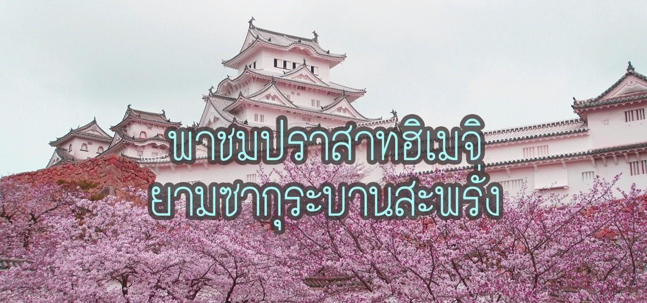 Himeji-sakur_25620321-032703_1