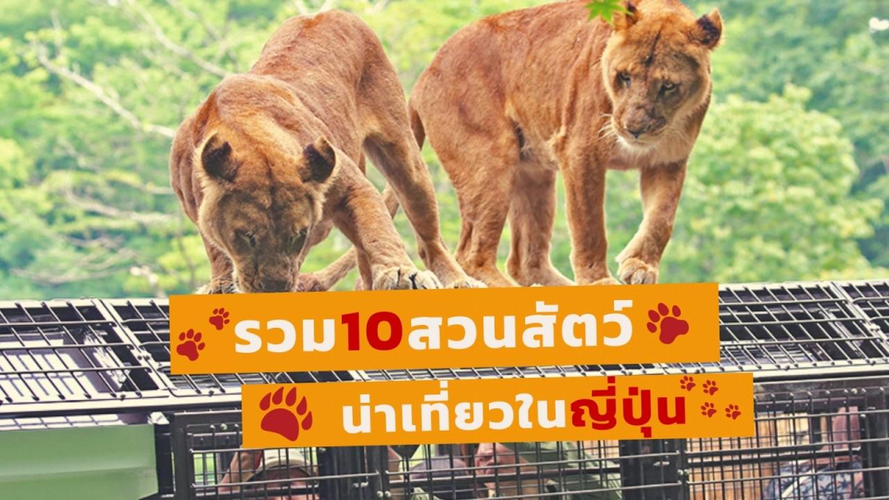 cov-blog-zoo