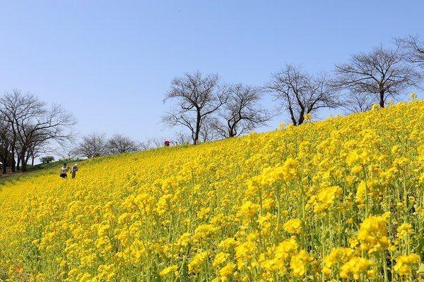 Mother Farm สวนดอกไม้ ไร่ผลไม้ สัตว์น้อยใหญ่ใกล้ๆโตเกียว