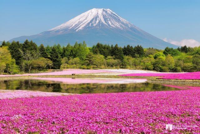 Golden week นั่งรถไฟขบวนใหม่ไปดูชิบะซากุระกันเถอะ!