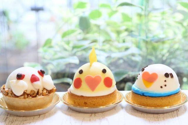 คาเฟ่แมวมันเก่าไปแล้ว! ต้องเจอกับ 'คาเฟ่นก'!! Kotori Cafe
