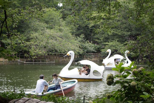 วันสบายๆที่สวนอิโนะคาชิระโคเอน