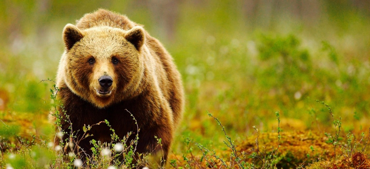 เรื่องหมีๆ ที่โนโบริเบ็ทสึ