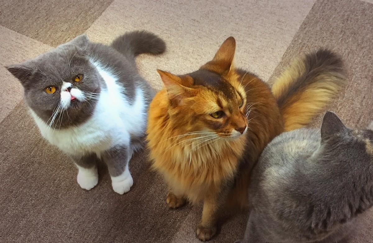 รีวิว คาเฟ่แมวสุดฮิตในอิเคะบุคุโระ Nekorobi