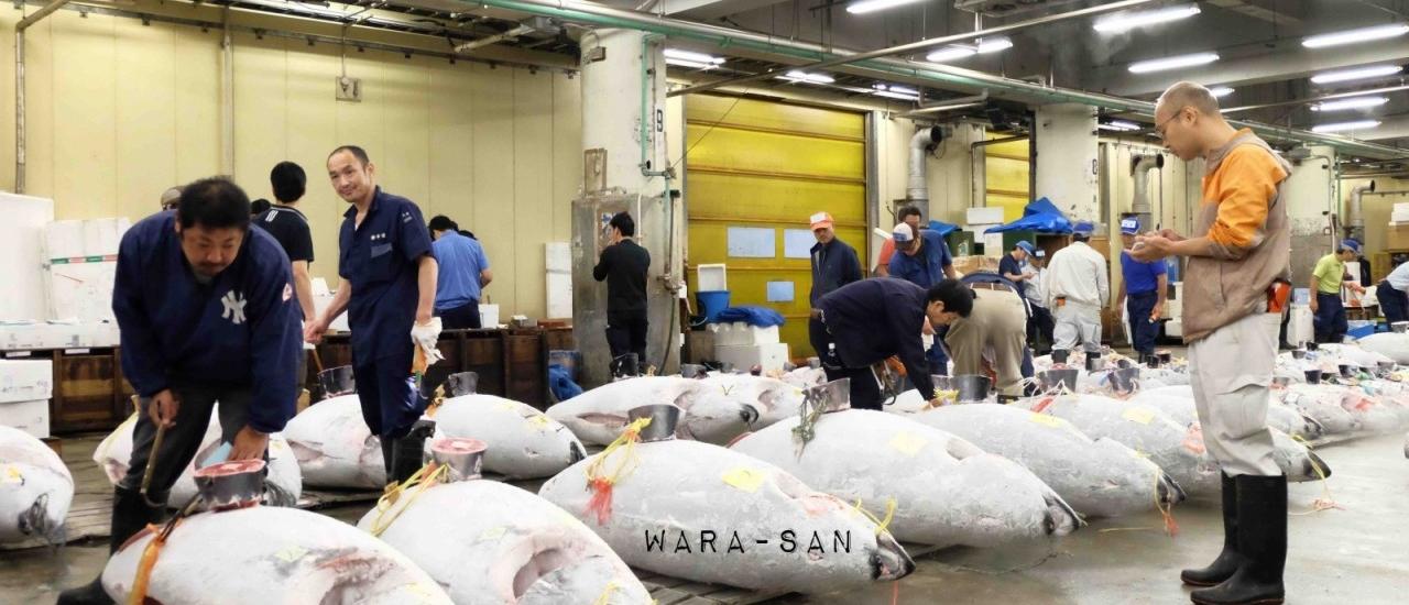 ตามไปดูตลาดสึคิจิ: ตลาดประมูลปลาในญี่ปุ่นที่ใหญ่ที่สุดในโลก