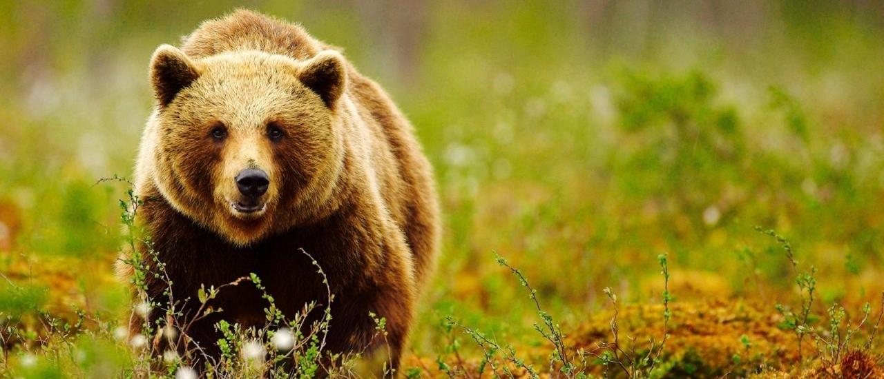 Noboribetsu Bear Park (สวนหมี โนโบริเบ็ทสึ)