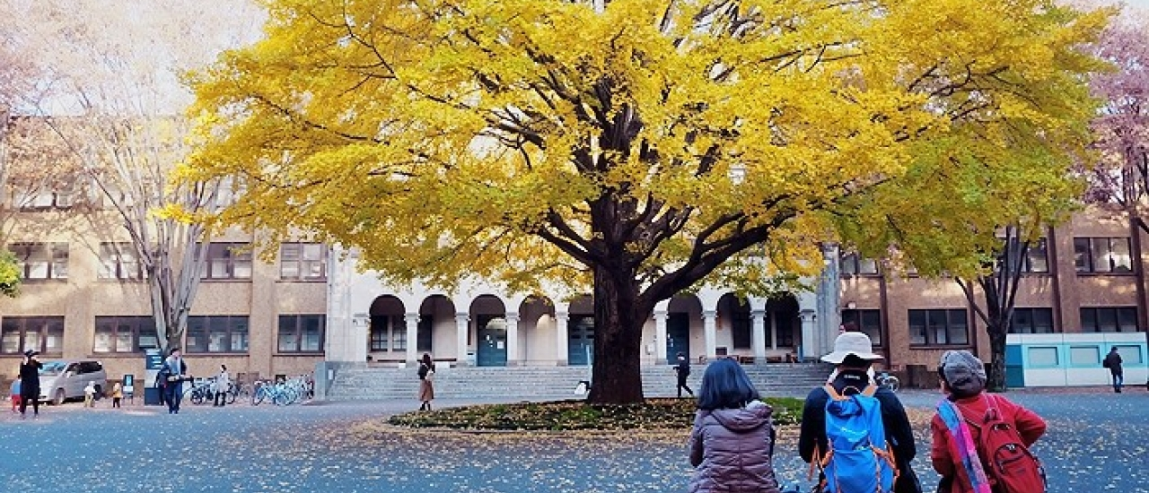 จุดชมใบไม้เปลี่ยนสีห้ามพลาด! เดินทางง่ายที่มหาวิทยาลัยโตเกียว