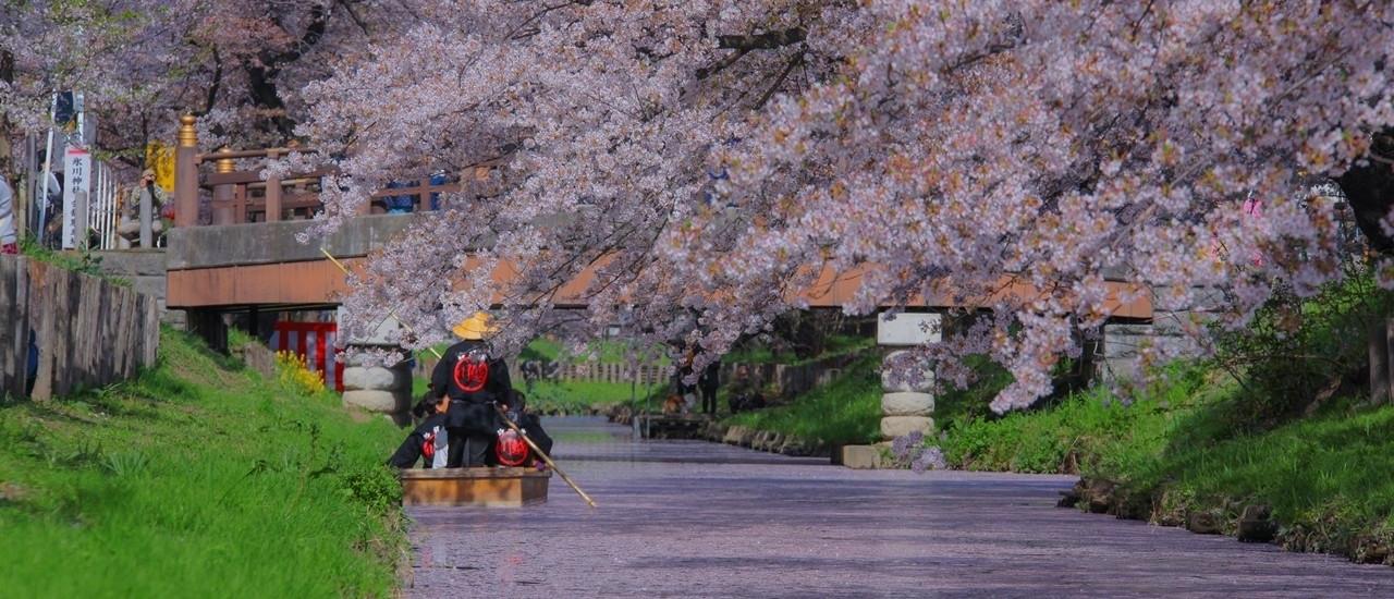 แนะนำจุดชมซากุระใกล้โตเกียวที่เดินทางแสนสะดวกด้วยรถไฟ Seibu